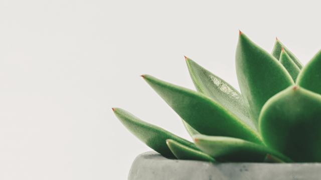Zimmerpflanze vor grauer Wand im Büro von Laura Witt von resonat Bremen – Coaching & Supervision